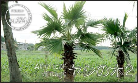 American vintage ヤシの木2 vol.124